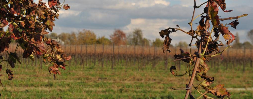 Il vino è la poesia della terra